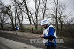 OSCE: Lệnh ngừng bắn lại bị vi phạm tại Ukraine