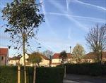 Sáng kiến phủ xanh thành phố London