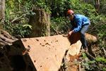 Rừng Tây Nguyên giảm nghiêm trọng