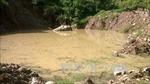 Hơn 1,3 ha rừng chết do nước thải chế mủ cao su
