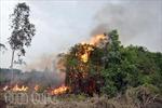 Quần nhau hơn 6 giờ với giặc lửa, bảo vệ rừng ven Sài Gòn