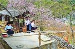 Mùa xuân trên Cao nguyên đá
