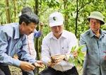 Bảo tồn và phát triển  cây sâm Ngọc Linh