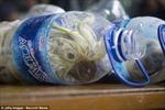 Nhét vẹt quý vào… chai nước để buôn lậu