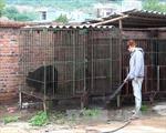 10 năm một chặng đường chấm dứt nạn nuôi gấu lấy mật