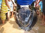 Cá ông mắc cạn, dạt vào bờ biển Thanh Hóa