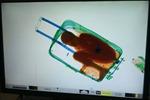 Giấu bé trai 8 tuổi trong vali để vượt biên