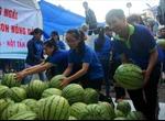 Tìm giải pháp cho tiêu thụ nông sản