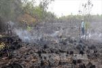 Hỏa hoạn thiêu rụi 12 ha rừng tràm U Minh Hạ, Cà Mau