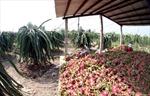 """Liên Bộ """"bắt tay"""" giúp nông dân tiêu thụ rau quả"""