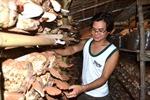Nông dân làm giàu nhờ nấm linh chi