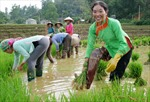 Người Pu Nà trồng lúa nước