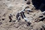 Iraq khai quật 470 thi thể từ các mộ tập thể ở Tikrit