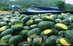 Tháo gỡ khó khăn cho từng nông sản