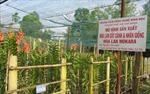 Chuyển dịch cơ cấu nông nghiệp mang lại hiệu quả