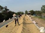Tái cơ cấu nông nghiệp vùng Tứ giác Long Xuyên