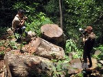 Điện Biên: Rừng nguyên sinh Tủa Chùa 'chảy máu'