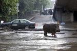 Thủ đô Gruzia 'nhấp nhổm' vì thú dữ sổng chuồng