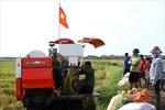 Nông dân đất lúa bỏ ruộng - Bài cuối