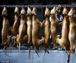 Tranh cãi 10.000 chú chó bị giết hại trong lễ hội Yulin
