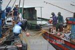 Thái Bình hoàn tất di chuyển dân đến nơi an toàn