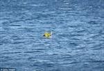 Bố mẹ mải tắm biển, con 10 tháng tuổi bị cuốn xa 1km