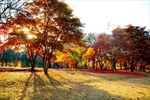 Mùa thu lá vàng, lá đỏ Hàn Quốc hấp dẫn khách Việt Nam