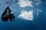 Xuống nước ngắm người mẫu chụp hình với cá đuối