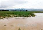 Từ Thừa Thiên Huế đến Bình Định đề phòng nguy cơ lũ quét