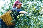 Đẩy mạnh giảm nghèo bền vững vùng cao Yên Bái