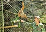 """Thợ săn trở thành """"cứu tinh"""" của họ hàng nhà khỉ"""