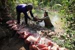 Nhật Bản hỗ trợ khẩn cấp 2,5 triệu USD khắc phục hạn, mặn