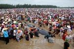 Giải cứu thành công cá voi 15 tấn trên bờ biển Nghệ An