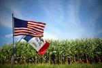 Nông dân Mỹ ngay ngáy lo mất trộm hạt giống