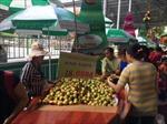 Hỗ trợ nông dân vùng hạn, mặn tiêu thụ trái cây