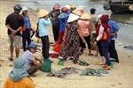 Ghi nhận tại Quảng Trị sau khi nguyên nhân cá chết được công bố