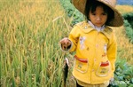 Các nhà khoa học ủng hộ cây trồng biến đổi gen