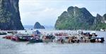 Phó Thủ tướng Trịnh Đình Dũng kiểm tra công tác ứng phó bão số 1