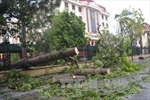 Bão số 1 càn quét Thái Bình, quật đổ hàng loạt cây xanh