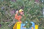 90 cột điện tại Hà Nội gãy đổ vì bão số 1