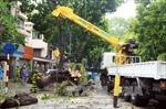 Hà Nội gãy đổ hơn 500 cây xanh do bão