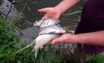 Cá chết, người bị viêm da khi tắm suối ở xã Nhân Cơ