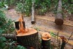 Đắk Nông thờ ơ lệnh đóng cửa rừng của chính phủ