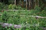 Phó Chủ tịch tỉnh Đắk Nông trực tiếp khảo sát nạn phá rừng