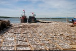 Chờ kết luận về hải sản miền Trung