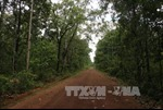 Dừng chuyển đất rừng để xây Nhà máy Thủy điện Đrăng Phôk