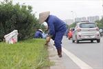 Hà Nội cắt giảm 708 tỷ đồng duy trì cây xanh