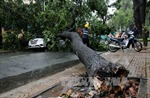 TP.HCM tiếp tục mưa lớn, nhiều cây xanh gãy đổ