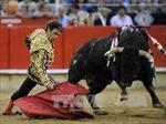 Tòa án Tây Ban Nha hủy bỏ lệnh cấm đấu bò tót ở Catalonia
