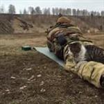 Mèo chiến sĩ ngủ trong cảnh súng đạn
